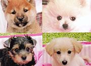 0804犬の店ワタナベ