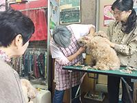 まちゼミ1711_犬の店ワタナベ